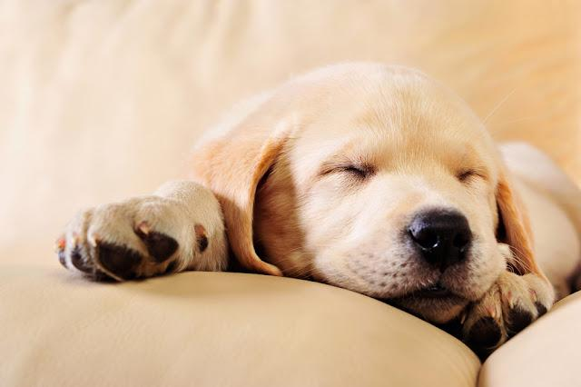 Little dog sleeping on sofa