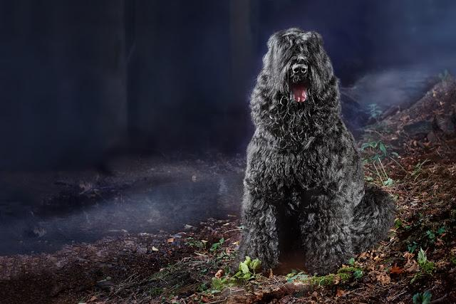 Large dog breed black russian terrier sits near rivulet in autumn enchanted foggy forest by night. Concept dog werewolf in fairytale night blue forest by moonlight, horizontal