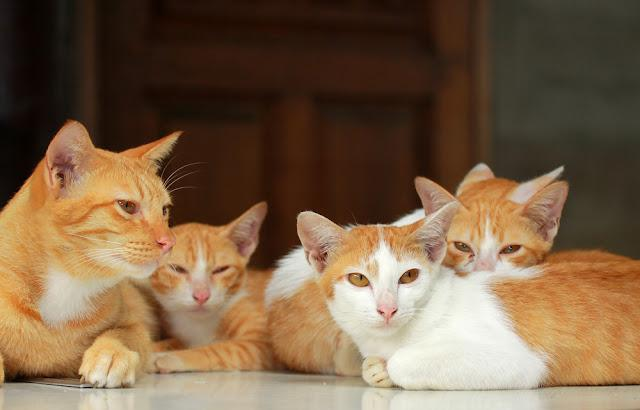 A group of brown cat on the table