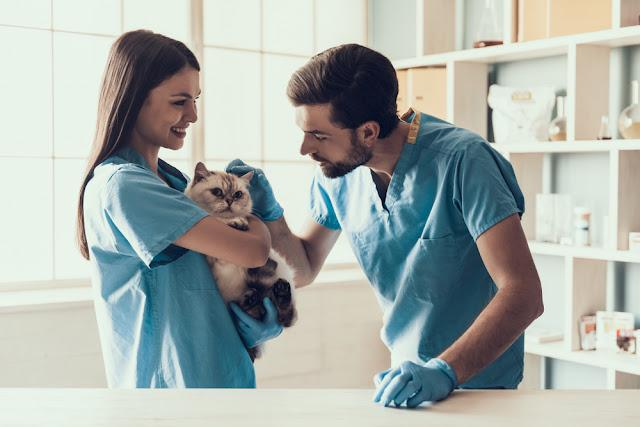 Smiling Professional Veterinarian Holding Cute Cat. Female Doctor Veterinarian is Holding Cute White Cat on Hands at Vet Clinic and Smiling. Veterinarian Concept.