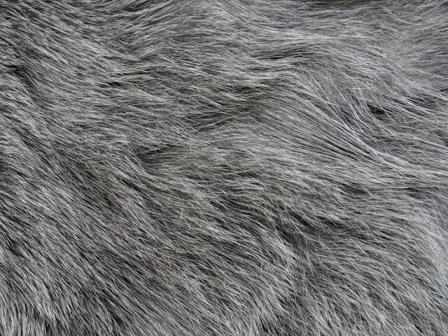 Gray cats fur as a background