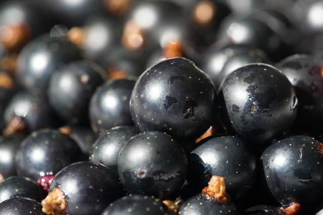 Black currant, blackcurrant, blackberry. vitamin C and polyphenol phytochemicals.  They are used to make jams, jellies and syrups and are grown commercially for the juice market.