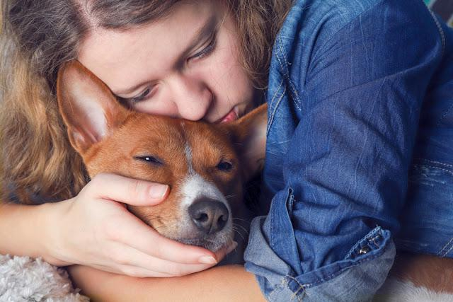 Teens girl snuggling and hugging her    basenji dog, toned.
