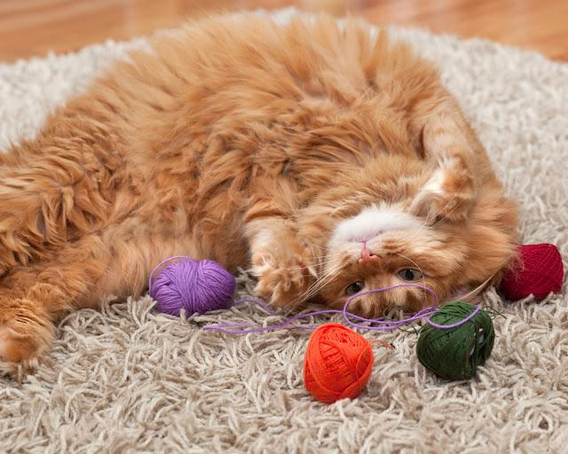 red fluffy cat playing with colored balls of yarn on a carpet