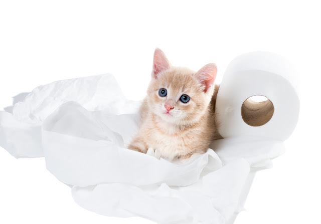 Kitten with innocent eyes and unwound toilet paper. I have nothing to do with!