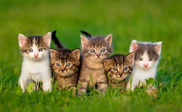 Group of five little kittens sitting on the grass