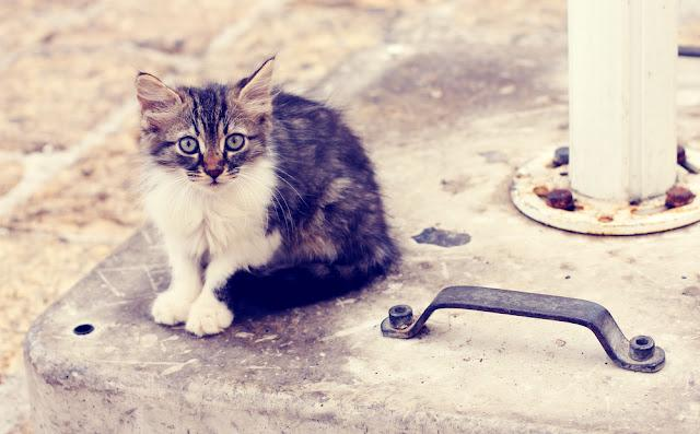 sad little homeless kitten on the street
