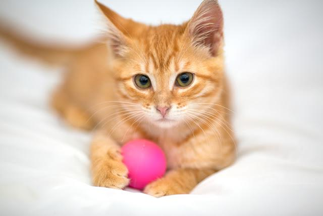Orange kitten with a ball on a white background