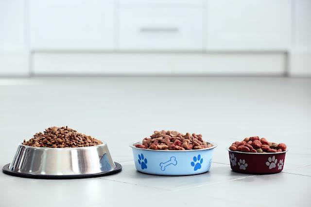 Pet food in metal bowls on a floor