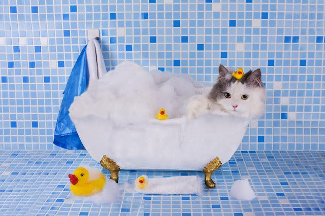 cat bathes in a bath with foam and duck