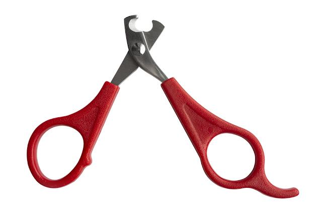 Scissors for claws for pets (dogs, cats, rabbits) isolated on white background
