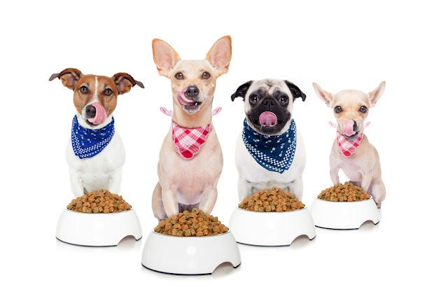 row of dogs as a group or team , all hungry and tongue sticking out ,in front of food bowls , isolated on white background