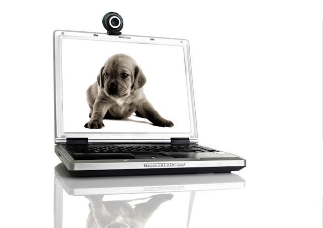 Laptop with a webcam over the table with a image of a pupie on the screan