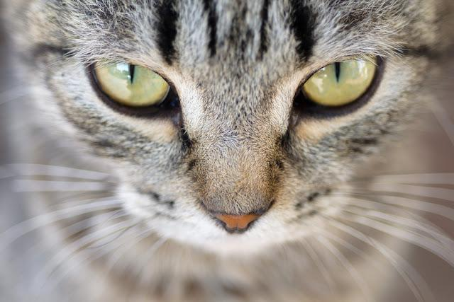 Closeup of Hypnotic Cat Eyes
