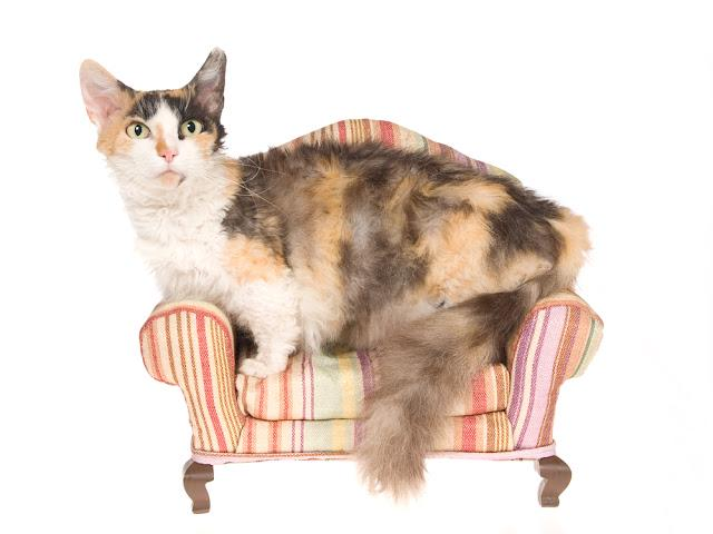 Rare Skookum on miniature couch, on white background