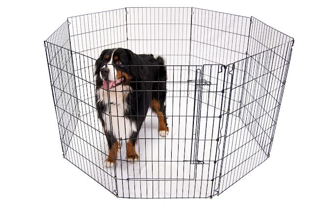 Bernese Mountain Dog in a portable kennel
