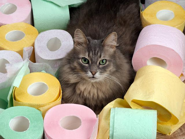 Cat and a lot of toilet paper. Cat resting among the rolls of colored toilet paper. Toilet for cats