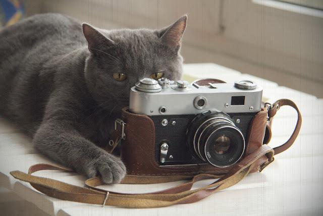 background with a cat that takes pictures old camera/Cat retro photograph or will now fly out birdie