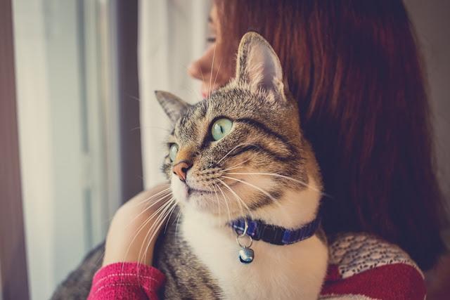 Pets Care.Young woman holding cat home.Cute cat watching and looking on womans arm in home.Friendship.Love
