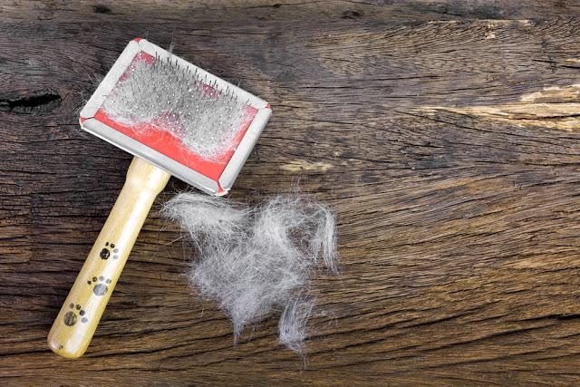 Hair of the cat and the dog on the brush on wooden background
