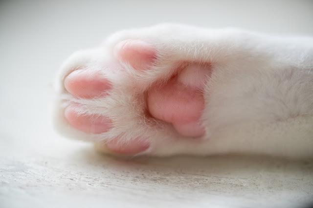 Closeup shot of the cats paws