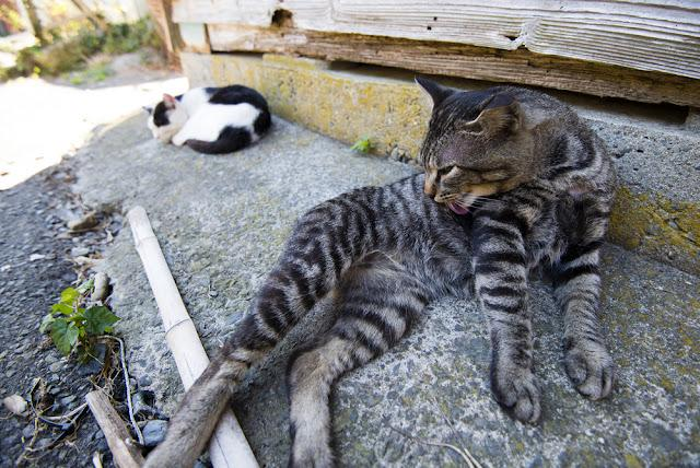 Cats in the Tashiro island