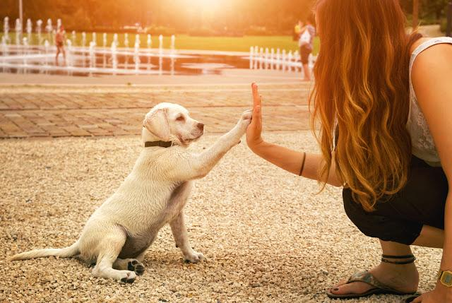 handshake between woman and pretty puppy- High Five - teamwork between girl dog