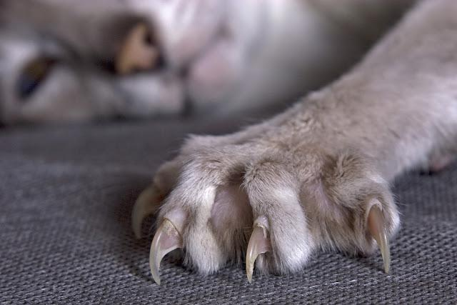 Largely cats paw with the extended claws
