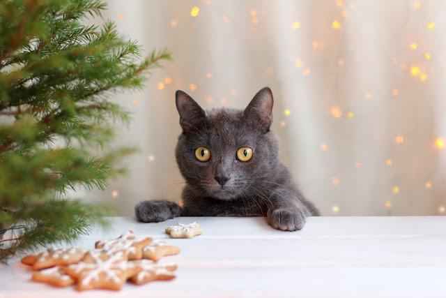 whiskered cat at a table with cookies and Christmas tree on the background of holiday lights / waiting favorite dish