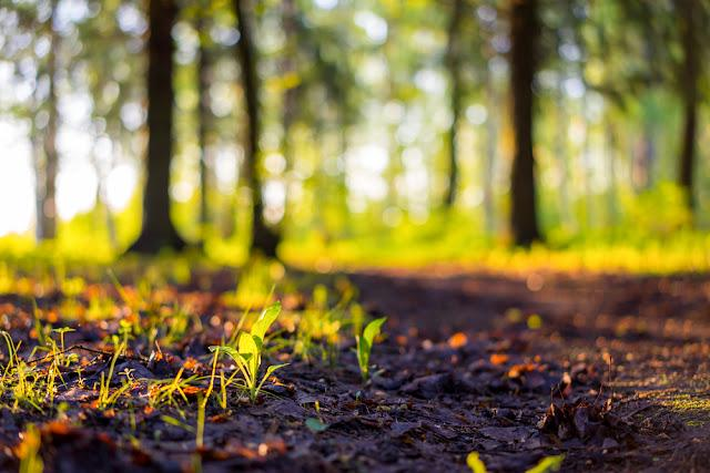 Close up spring nature landscape. Ground forest on sunset, summer background. Blurred nature background copy space. Park low focus depth. Ecology environment. Ground in the nature park during spring.