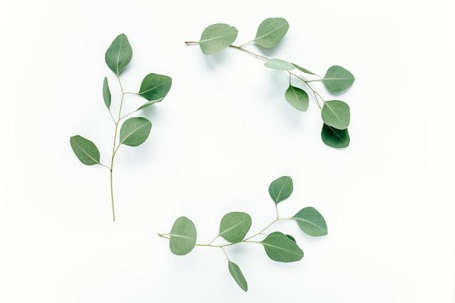 Round frame with pink flower  buds, branches eucalyptus and leaves isolated on white background. lay flat, top view