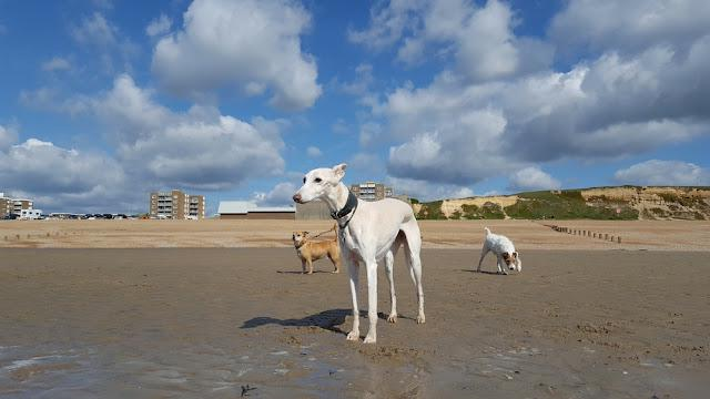 Dogs on sandy beach in summer.