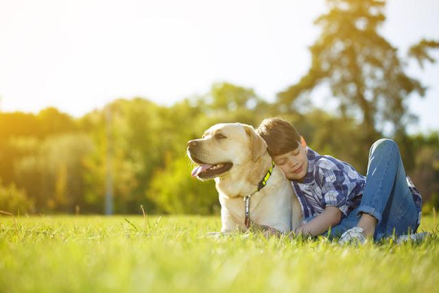 Young boy and his dog lying on the grass together. Happy boy hugging his pet Labrador smiling with his eyes closed copyspace nature happiness support friendship peaceful summer animals lifestyle
