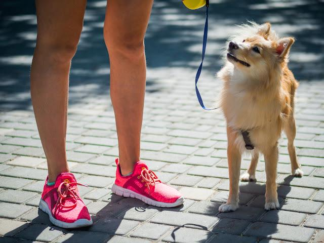 Big pomeranian spitz dog next to a girl in the street.