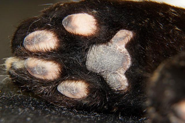 the sole of the cats foot on the whole frame, fingerprints are visible