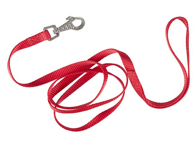 Red nylon dog lead or leash isolated over white