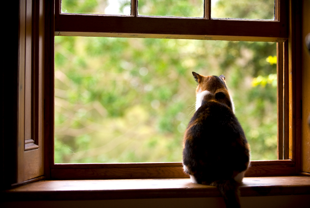 A fat cat sitting on a window sill looking outside.