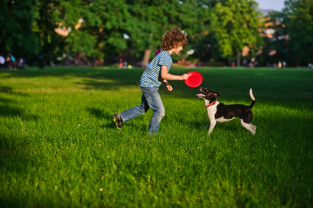 Blonde boy playing with his black and white dog on the lawn in the park. Boy is holding a frisbee. His pet attentively looks at the owner. The doggy has raised a tail up. She likes game.