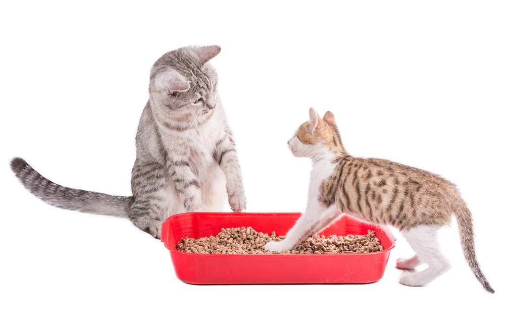 two funny cats playing in a plastic litter box