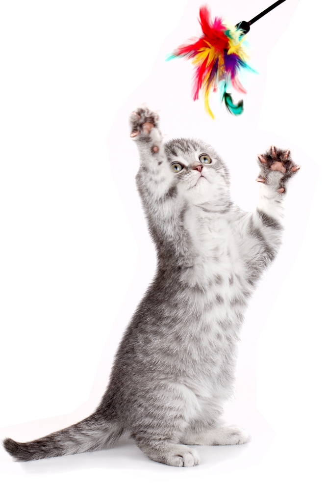 Little kitty playing with a toy